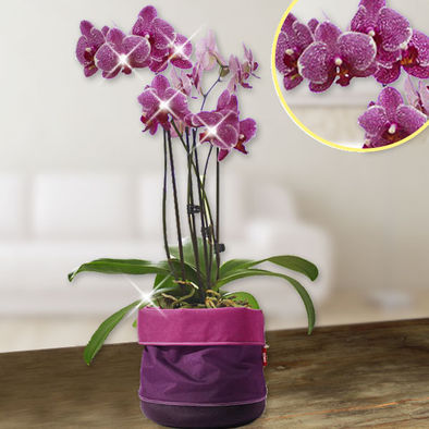 Lila Orchidee im Emsa Softbag