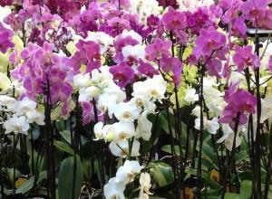 bunte Orchideen