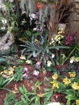 Orchideenverein Ausstellung 2