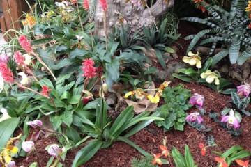 Orchideenverein Ausstellung 3