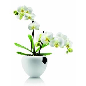 selbstbewaessernder-orchideentopf