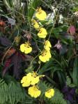 botanischer-garten-linz-orchidee-oncidium