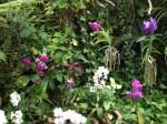 loro-parque-orchideen-bunt