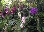 loro-parque-orchideen-bunt-gemischt