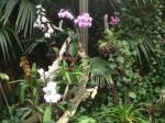 loro-parque-orchideen-gemischt-weiss-lila
