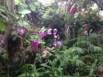 loro-parque-orchideen-haus