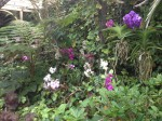 loro-parque-orchideen-park