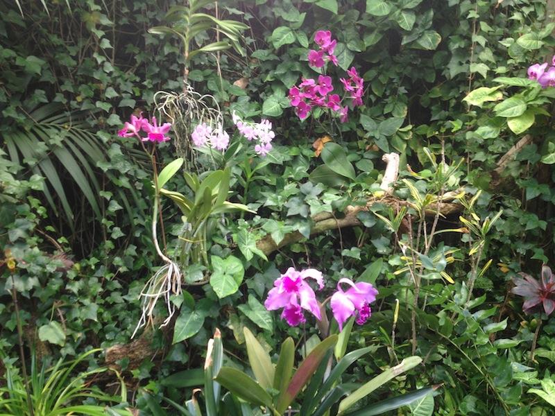 loro parque orchideen pink orchideen versenden. Black Bedroom Furniture Sets. Home Design Ideas