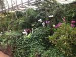 loro-parque-orchideengarten