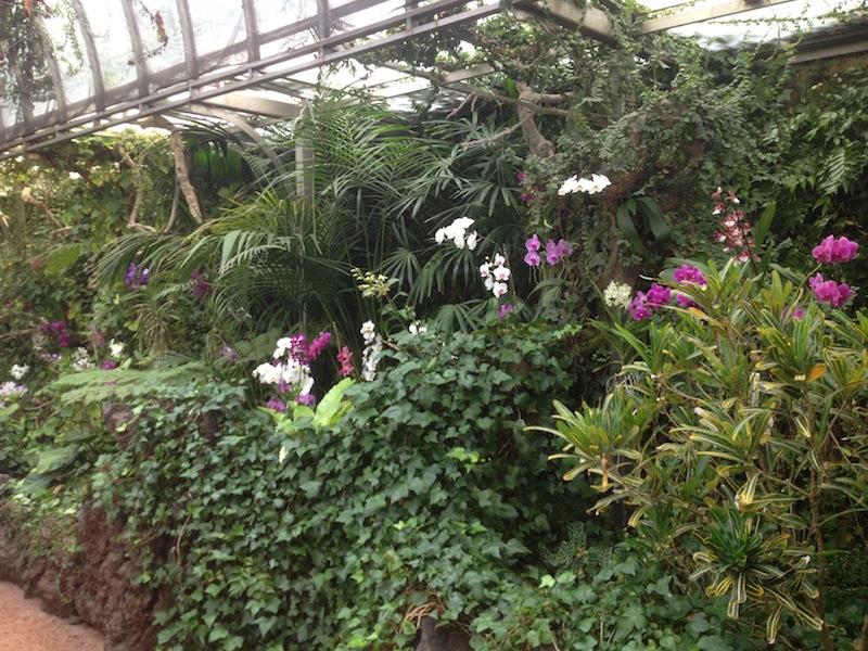 loro parque orchideengarten orchideen versenden. Black Bedroom Furniture Sets. Home Design Ideas