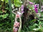 orchideen blog der blog zum thema orchidee und arten. Black Bedroom Furniture Sets. Home Design Ideas