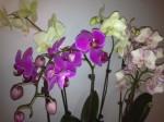 Orchideen als Ostergeschenk